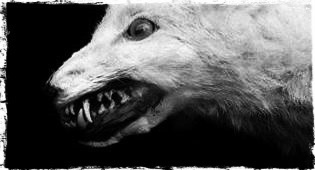 It was vulpine. Its fur was gore-matted, sparse; it was bald in cankered patches. It was snaggletoothed. Its eyes were jetty orbs.