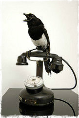 One of these latter was perched on an old-fashioned Bakelite telephone, beak cruelly agape.